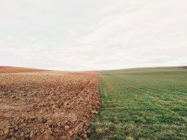 Põllumaade rent