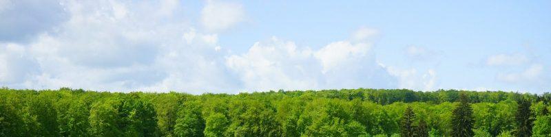 Metsa-ja põllumaa ost