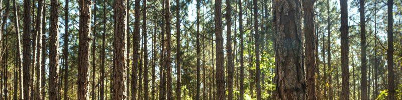 Metsa uuendamine